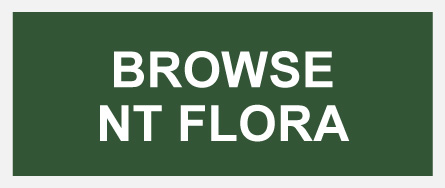 Browse NT Flora